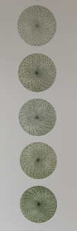 Double Spiral Cactus Etching 28in x 5in 2014 edition size: 7