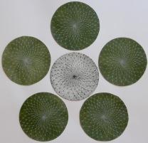 Sakura Etching 14.5in diameter 2016