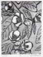 Tsubaki Intaglio 8in x 6in 2017 Edition Size: 4